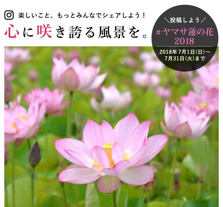 ヤマサ蓮の花2018フォトコン